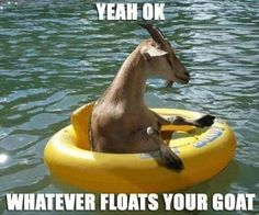 http://1.bp.blogspot.com/-QmxWEhDR3Cc/UexS-xYK9oI/AAAAAAABF8M/id3tlBPHUEo/s1600/1floats+ur+goat.jpg